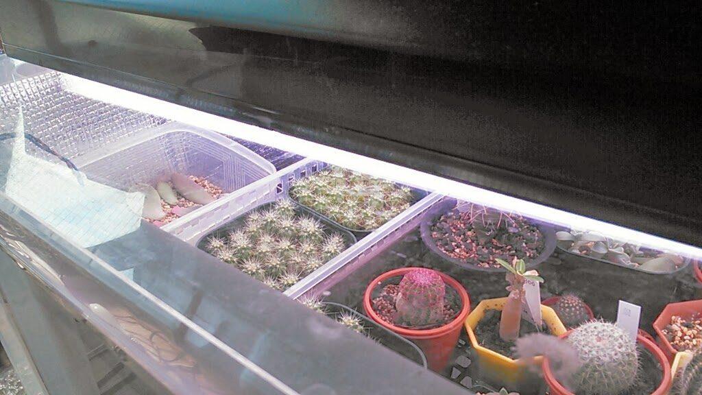 植物育成灯