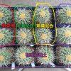 培養土と肥料についての実験の途中経過