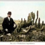 色鮮やかに蘇る100年前のサボテン