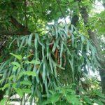 ディズニーシーの植物たち(一般植物編)
