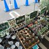 コーナン港北インター店の多肉植物フェアに行ってきたぞ!