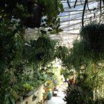 リプサリスの成長記録と挿木や育て方など