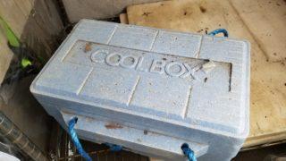 発泡スチロールの箱に3年間密封したサボテンはどうなった?