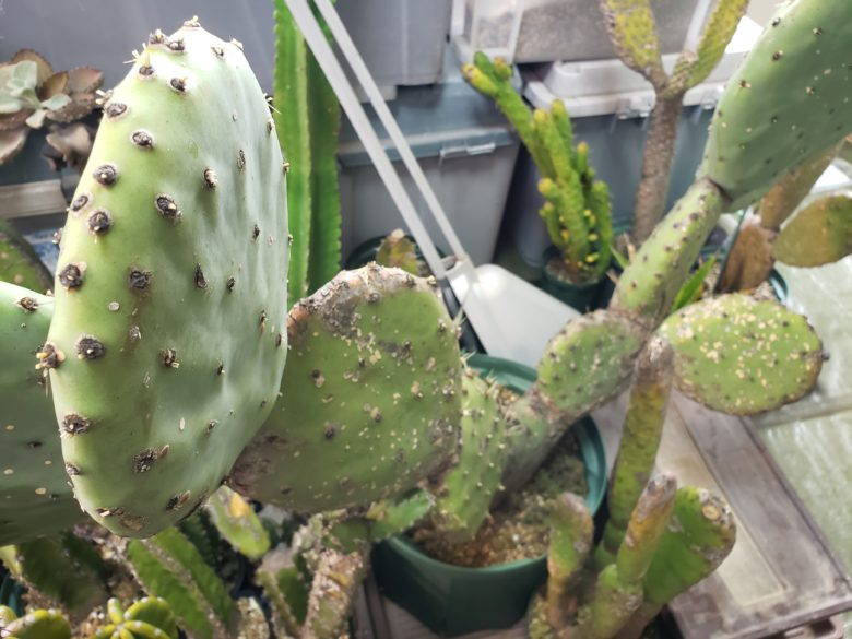大規模修繕と植物