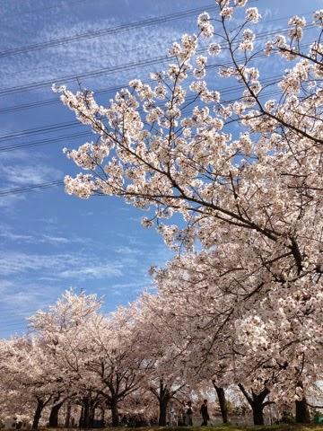 春日井サボテン祭り