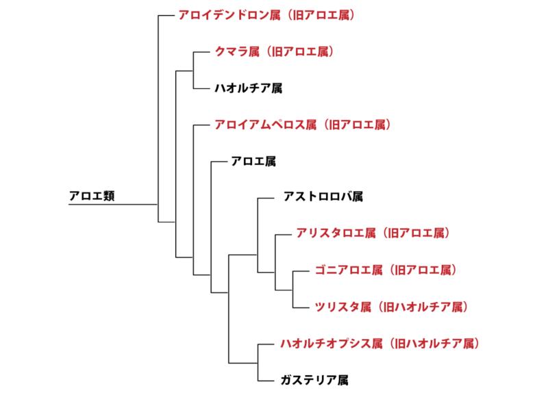 アロエ類系統樹