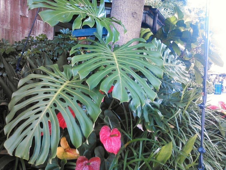ディズニーランドの植物